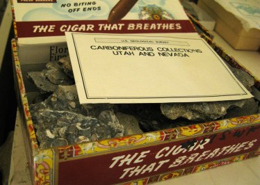 fossils in a cigar box, backstage NMNH