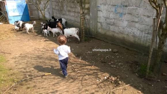gnappo e capre