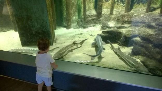 acquario civico milano attività per bambini