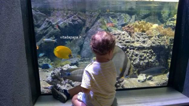 acquario civico milano bambini