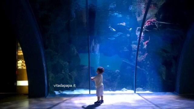 acquario civico milano peschi