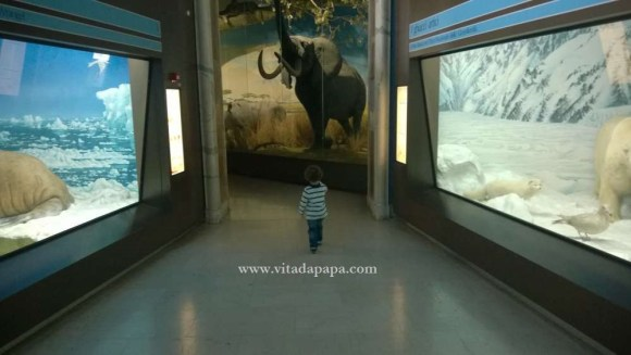 Museo di storia naturale milano bambini animali (10)