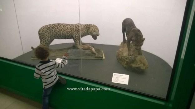 Museo di storia naturale milano bambini animali (5)