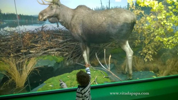 Museo di storia naturale milano bambini animali (8)