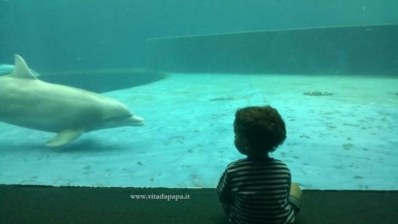 delfini bambini acquario di genova