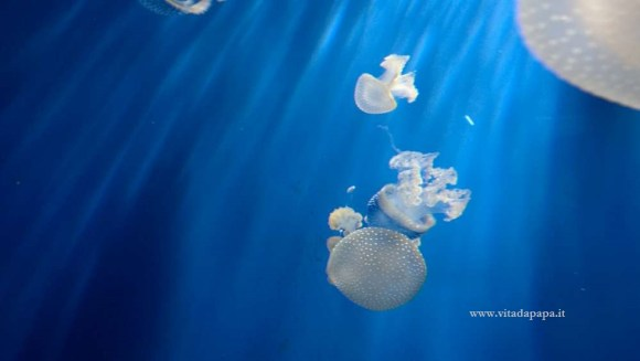 meduse acquario di genova
