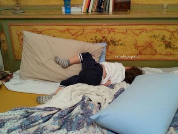 gnappo dormiens