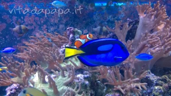 Nemo e Doris