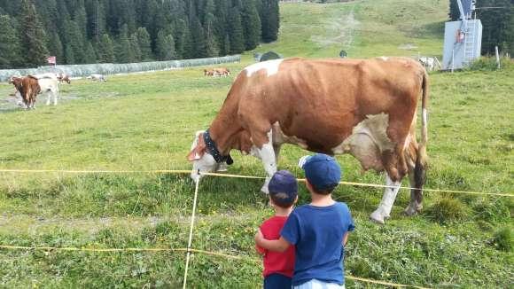 Vacanze 2018, Bambini e mucche