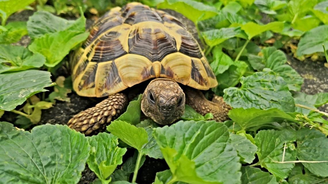 malattie tartarughe di terrai