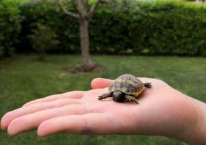 tartarughe appena nate
