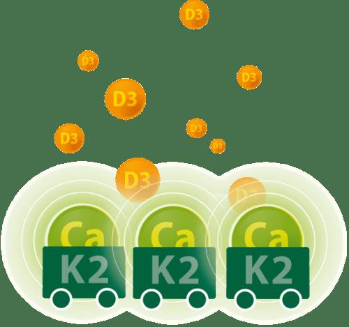 Infographic Vitamine D3 & K2