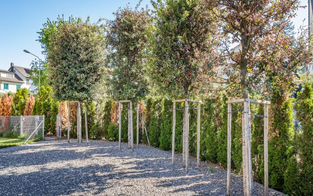 Schadensdiagnose Gartenneuanlage