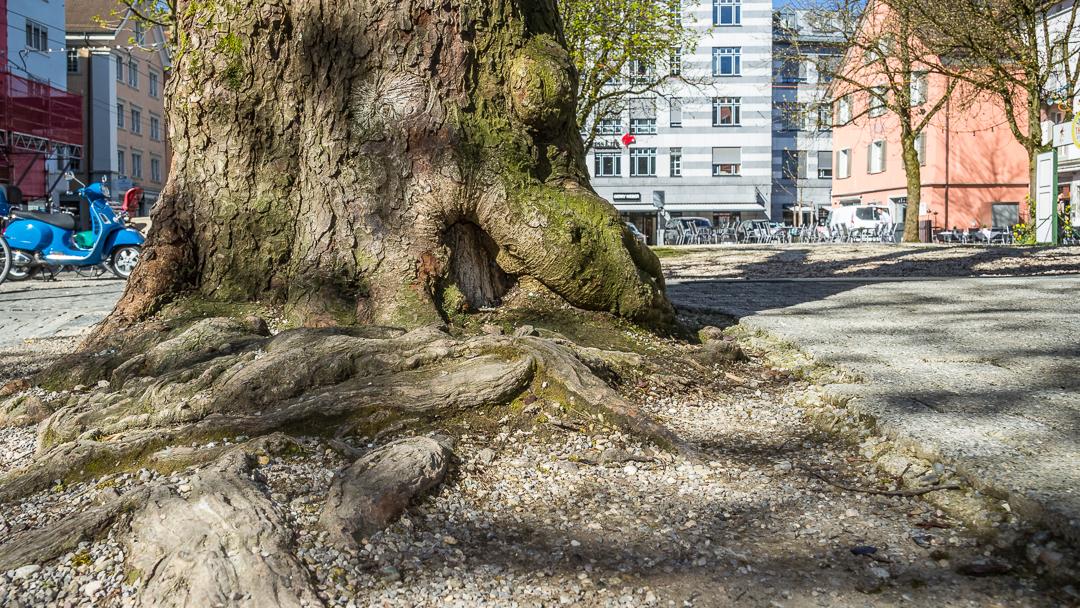 Baumgutachten und Expertisen