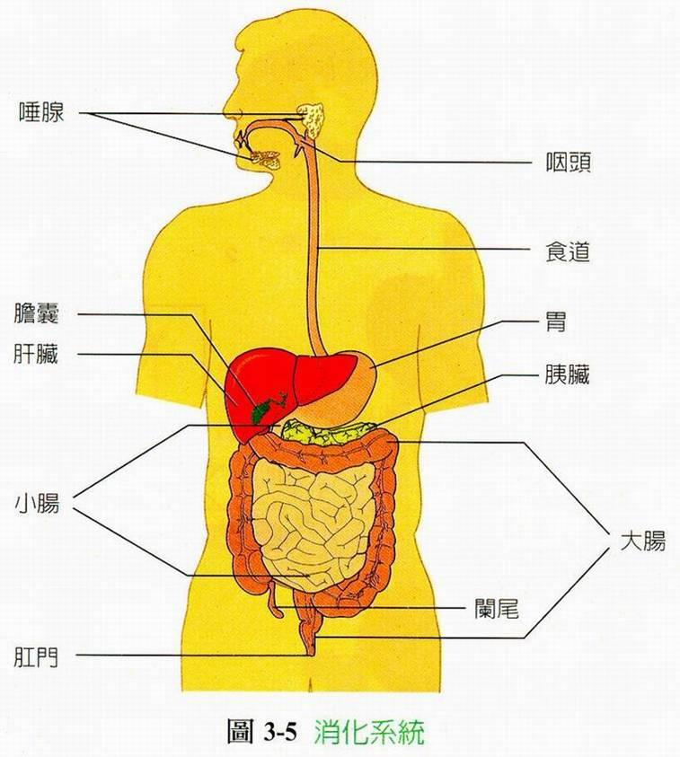 生理解剖 » 和生中醫藥坊
