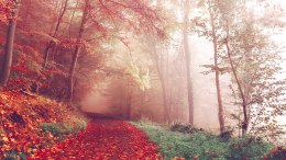 forest-in-autumn