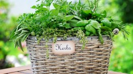 2020-04 basket-with-herbs-PXR8D3B
