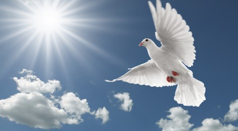 Image result for peace of God