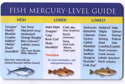 FishMercuryLevels