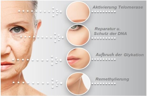 4-Ursachen-Alterung
