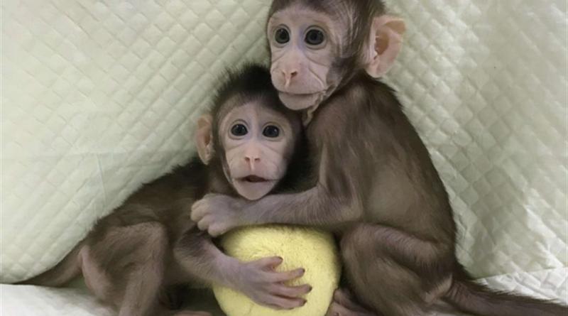 L'esercito delle due scimmie