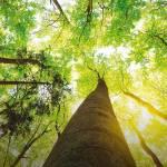 Mpv ed ecologia integrale – di Franco Vitale