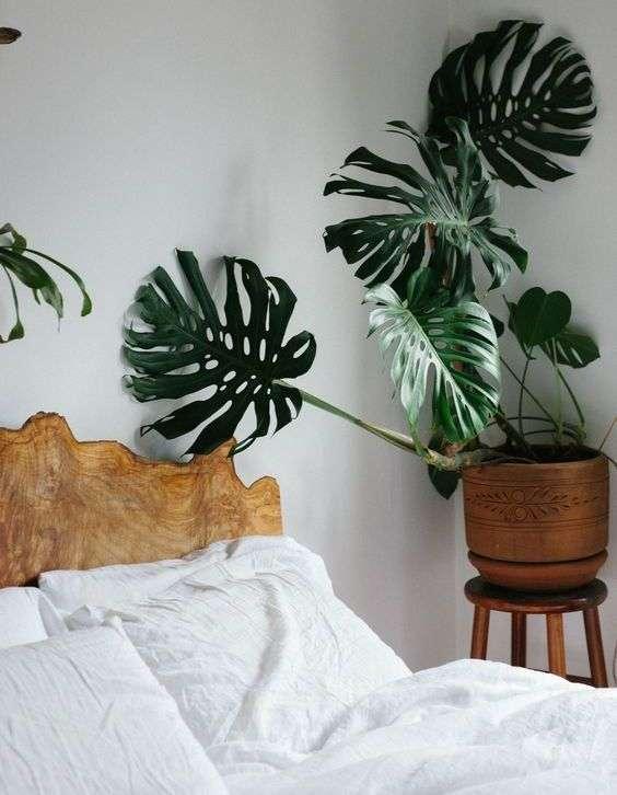 Quali piante comprare