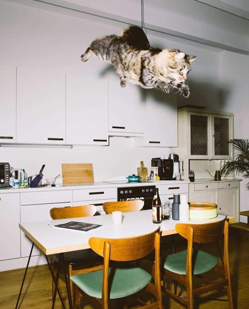 gatto che salta e vola