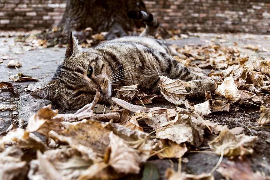 gatto e foglie autunno