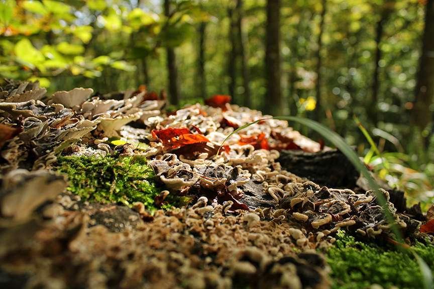Foglie arancioni nella foresta