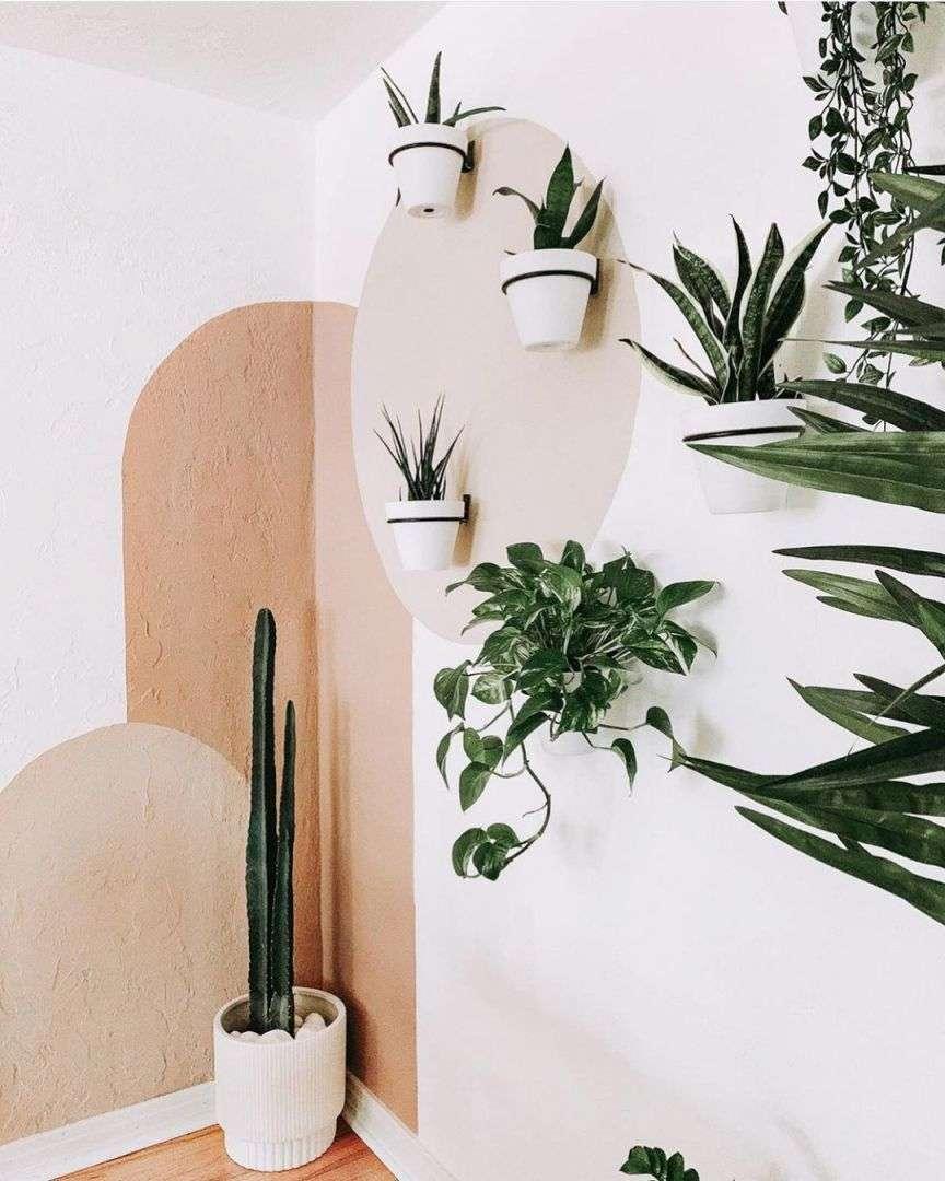 piante appese