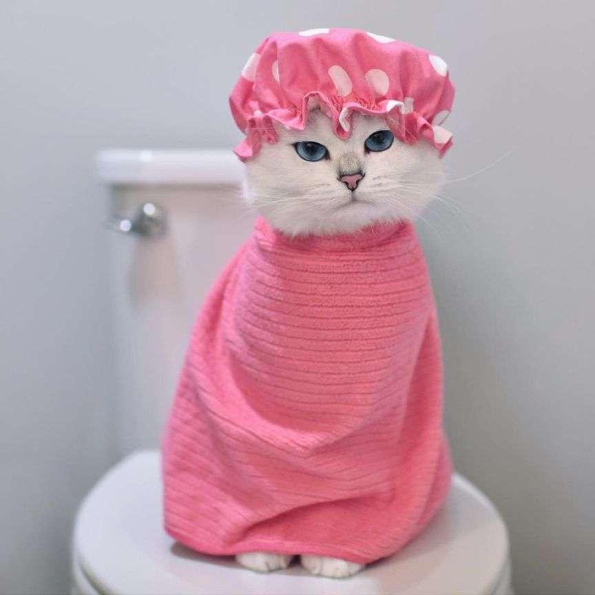 gatto che ha fatto la doccia