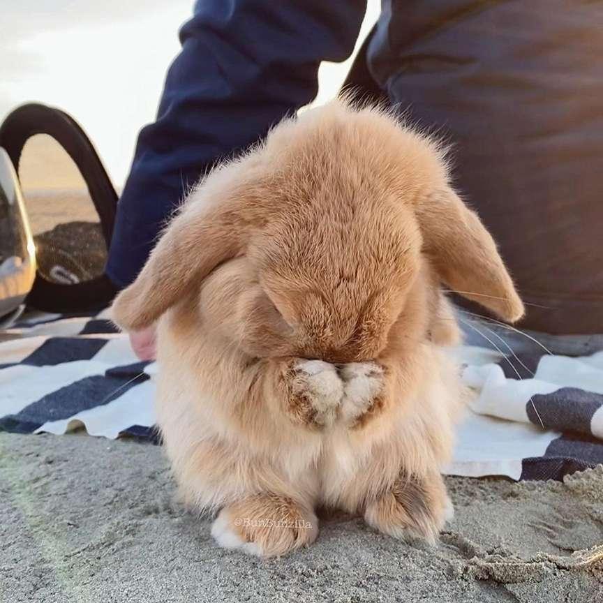 Coniglio tenero
