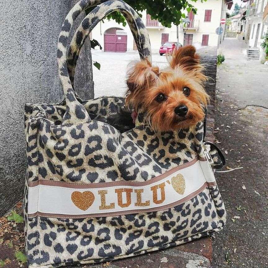 personalizzare accessori cane
