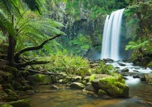 Vitelle Rainforest