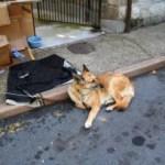 Prefeitura de Cubatão deve recolher animais abandonados