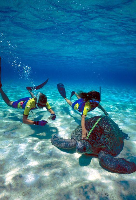 Esses destinos são ideias para férias perfeitas. Piscinas naturais rodeadas por recifes de corais, praias selvagens em áreas isoladas do Atlântico e abundância de animais endêmicos.