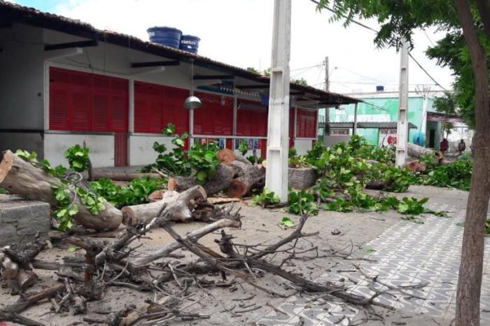 Árvores históricas são cortadas e revolta população na cidade de Serra Branca