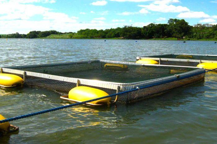 Parceria entre Prefeitura de Monteiro, SEBRAE e UFCG assegura investimentos para produção de alevinos