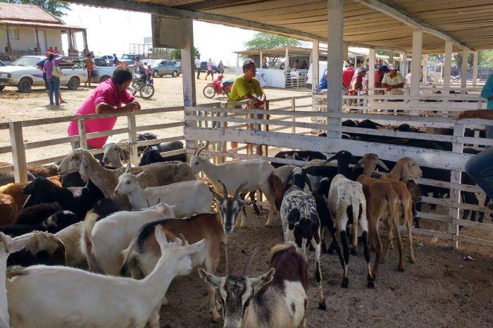 Feira de Animais de Monteiro supera todas as expectativas e bate recorde de comercialização