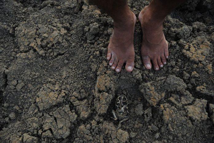 Seca aumenta e já afeta mais de 1,3 milhão de pessoas na Paraíba
