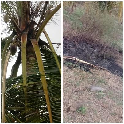 Raio atinge propriedade rural no Cariri e sábado é marcado por chuvas e raios na região