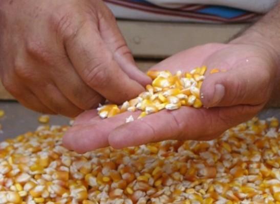 Em parceria com Estado, prefeitura de Ouro Velho distribuirá sementes para os agricultores