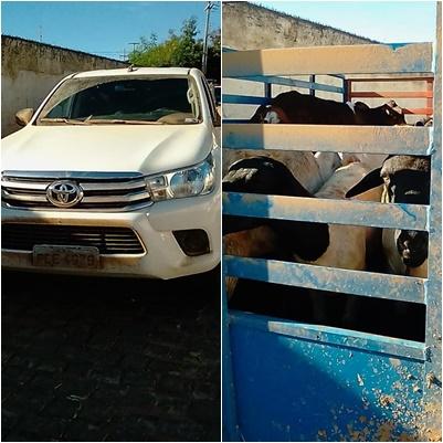 NO CARIRI: Polícia prende acusados de roubar animais em propriedade rural no Pernambuco