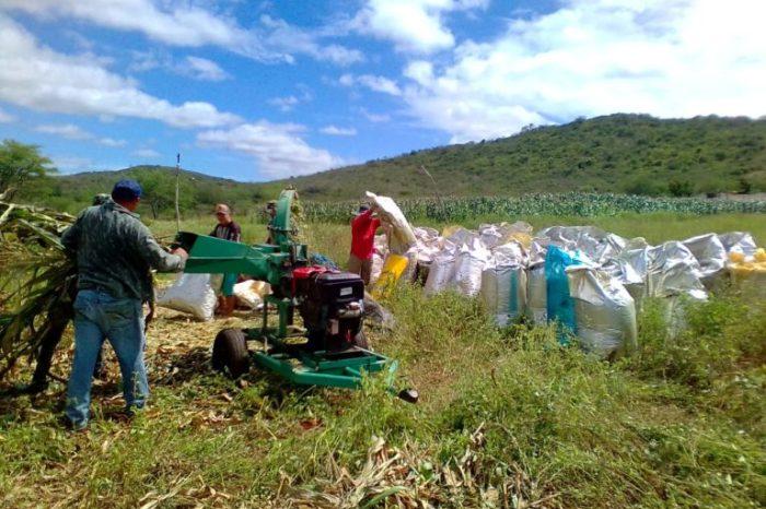Caraúbas e São Domingos do Cariri ganham destaque na mídia nacional na área agropecuária
