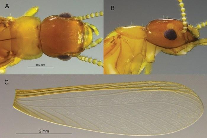 Nova espécie de cupim é descoberta no Cariri paraibano por pesquisador da UFPB
