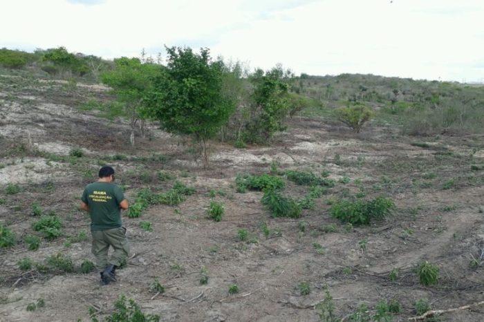No Cariri, Ibama detecta 287 hectares de área desmatada no bioma caatinga em seis municípios