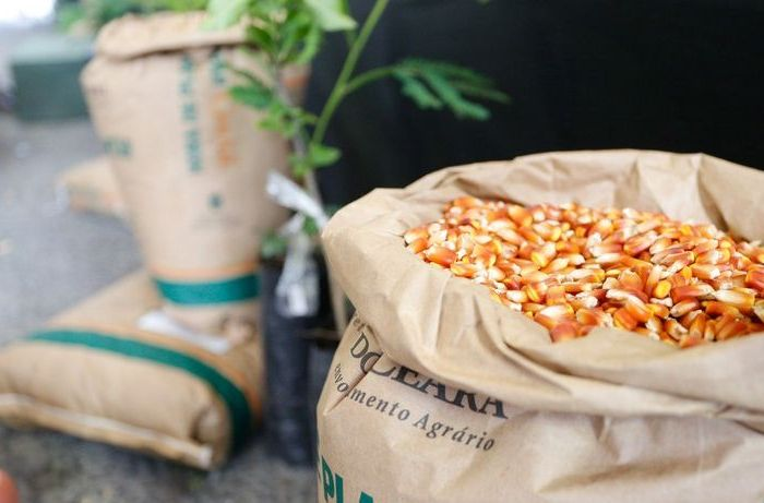 Prefeitura de Sumé e Empaer iniciam entrega de sementes a agricultores do Garantia-Safra