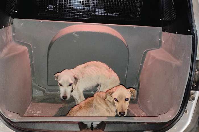 Polícia resgata cachorros mantidos em situação de maus-tratos em Monteiro
