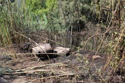 L'incendi ha cremat una zona molt propera a l'incendi de fa 8 mesos // Jordi Julià